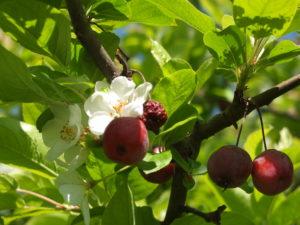 vieux fruits et nouvelles fleurs