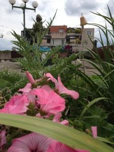 jardin en lasagnes au mois d`aout